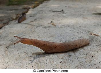 Long pink slug     - A long and pink slug