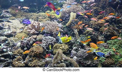 tropical fish swimming on coral reef