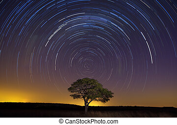 Star trail with lone tree brown grass and soft light - Star...