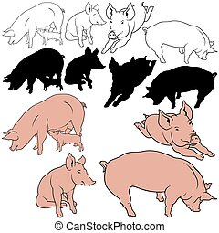 Pig Set 03 - colored hand drawn illustration