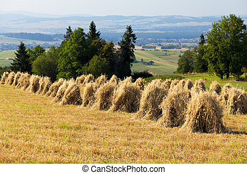 field with some bundles of hay in the summer on blue sky background