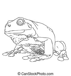 Frog illustration on white background