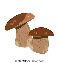 Boletus mushroom on simple white background