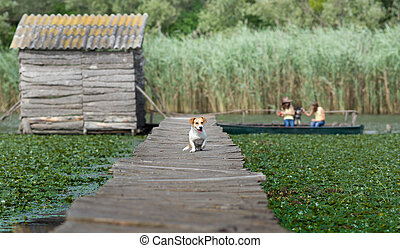 Lonely dog - Cute mixed race dog walking on dock while girls...
