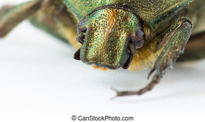Extreme closeup of beetle - Extreme closeup view of green...