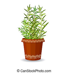 Rosemary in a flower pot