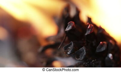 Burning pine cone - In a small stove burning pinecone