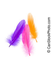 Colorful Feather with white background
