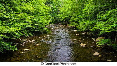 A small stream, at Great Smoky Mountains National Park,...