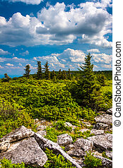 Rocks and pine trees at Bear Rocks Preserve, Monongahela...