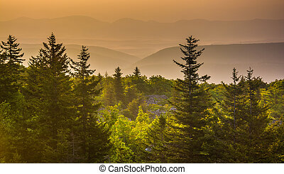Pine trees and distant mountains at sunrise, seen from Bear...