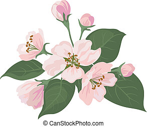 Apple tree flowers and green leaves - Pink apple tree...