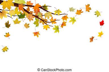 Autumn branch - Branch with autumn maple leaves, vector...
