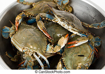 Blue Crab close up shot
