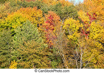 Rock Cut State Park Autumn Scene - Rock Cut State Park of...