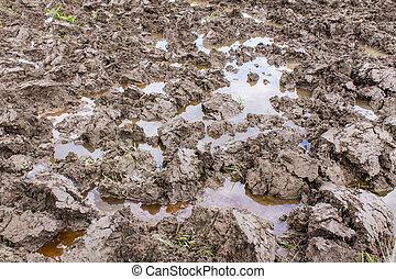 Soil in rice field