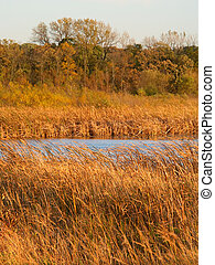 Wadsworth Prairie Nature Preserve Illinois - Wadsworth...