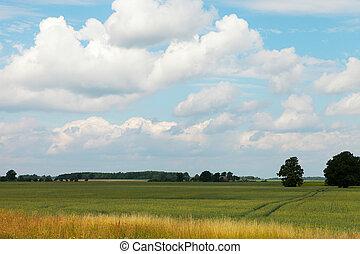 Grain field. - Clouds over grain field in nice summer day.