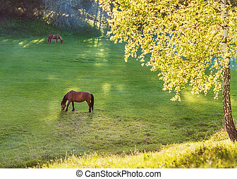 horse grazes on meadow