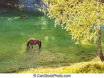 horse grazes on meadow