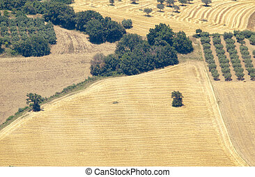 Abruzzo countryside: arable, trees, harvested fields