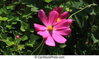 asia flower - korea