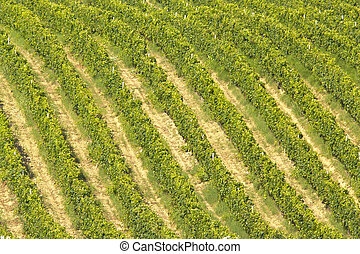 Vineyard rows quater - Vineyard rows in Abruzzo's hills,...