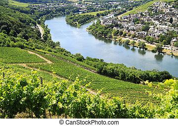 Grape plantation river Moezel