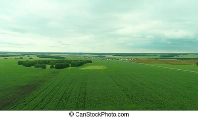 Aerial . Agriculture. Corn - Camera moves over the corn...