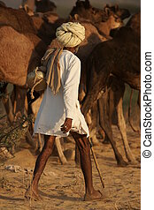 Camel Herder - Camel herder controls his camels at the...