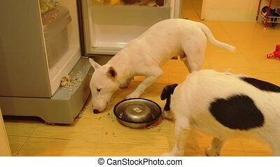 Funny Hungry Dogs Steal Food from Refrigerator and Eating...