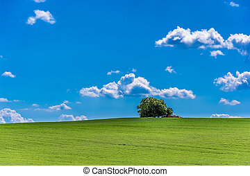 tree on hill and blue cloudy sky rural landscape