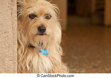 Cute dog portrait - Cute older dog sitting in front of house