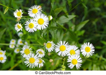 Wildflowers of Michigan 49 - Tiny, seemingly inconsequential...