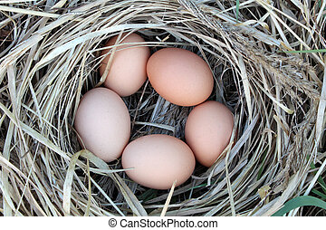Chicken eggs in a arranging nest - Easter composition -...