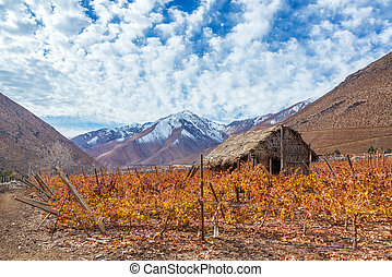 Pisco Vineyard - Vineyard in the Elqui Valley for pisco...
