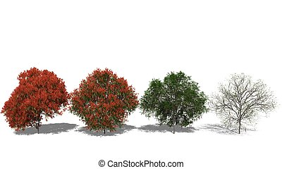 Delonix regia Four Seasons - 3D computer rendered...