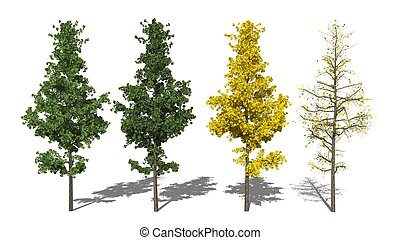 l,  ginkgo,  seasons),  biloba,  (four