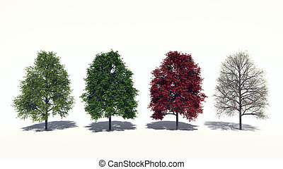 Acer rubrum Four Seasons - 3D computer rendered illustration...