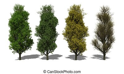 Quercus robur Fastigiata Four Seasons - 3D computer rendered...