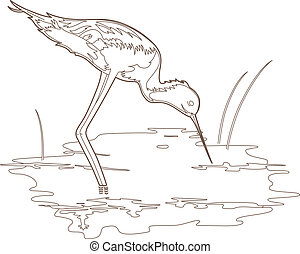 Small wader - Vector illustration of a bird, EPS 8 file
