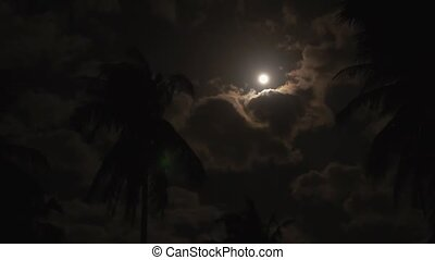 Palm Trees under the Moonlight. Bright Moon at Dark Night. Speed up.