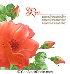 Flower Rose Vector Background - Floral vector background...