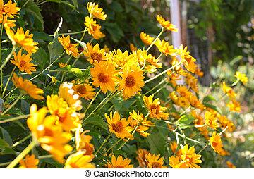 yellow orange flowers - beautiful field of yellow orange...