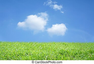 field on a background and blue sky