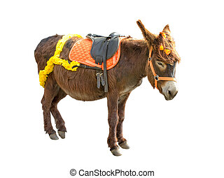 Smart Donkey isolated on white background