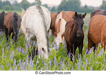 Horses eat a grass on a summer pasture