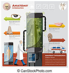 Health And Medical Otolaryngology Anatomy Infographic Design...