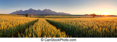 Sunset over wheat field with path in Slovakia Tatra mountain...