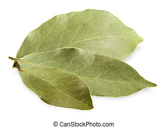 bay leaves - Aromatic bay leaves on white background